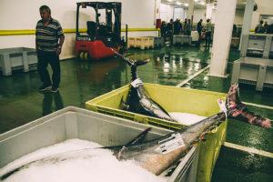 donostitik bonito eusko label 02 300x200 - Más de 1.500 toneladas de bonito del Norte han llegado a los puertos en lo que va de campaña