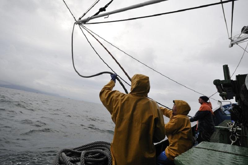 Pesca del verdel. Foto: Gobierno vasco