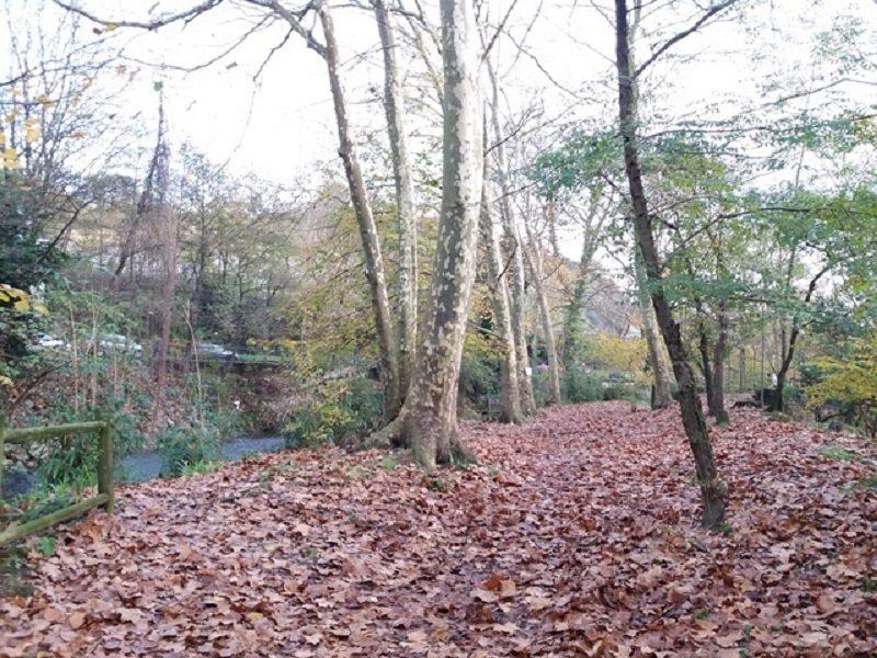 bosque Naturkon critica la Orden para las ayudas de los bosques