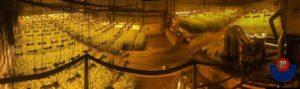 IMG 20190130 WA0000. 300x89 - Desmanteladas dos plantaciones de marihuana con 13.500 plantas en Zumaia y Deba