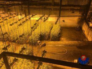 IMG 20190130 WA0003 300x225 - Desmanteladas dos plantaciones de marihuana con 13.500 plantas en Zumaia y Deba