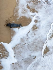 IMG 20200112 WA0008 225x300 - (Vídeo) Una foca junto al Pico del Loro