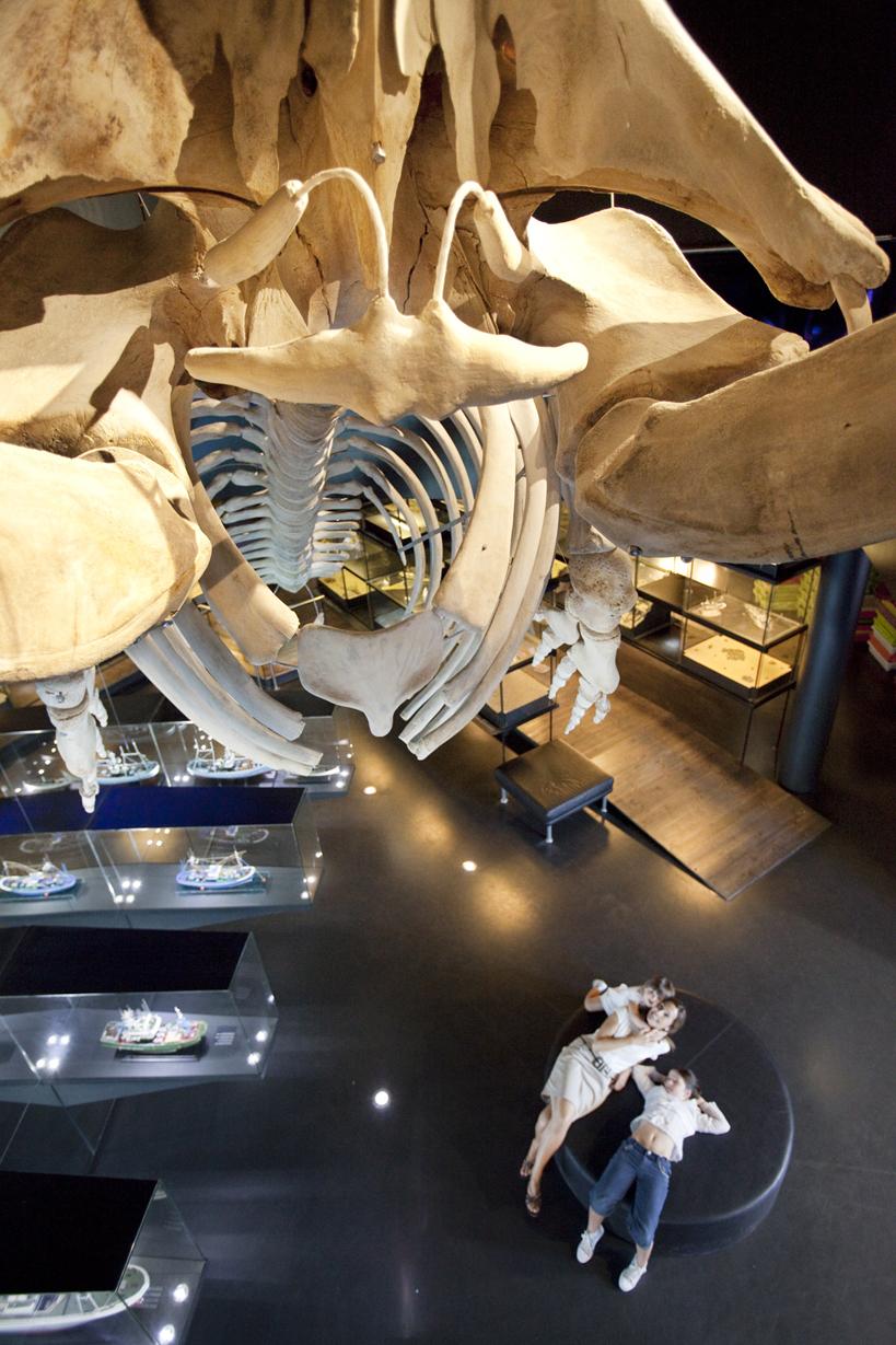 El esqueleto de la ballena. Foto: Aquarium San Sebastián