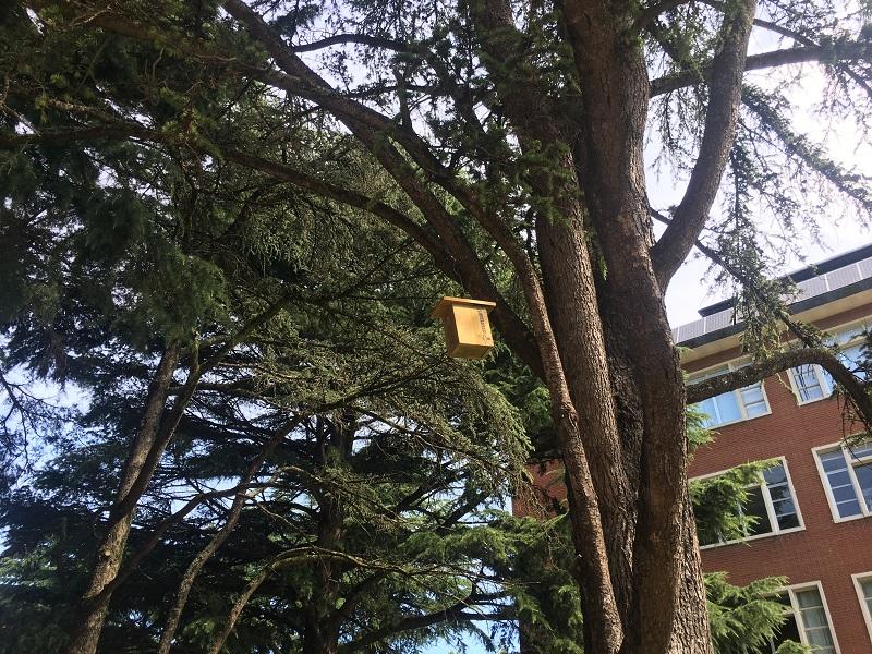Caja-nido en los árboles. Foto: Ayuntamiento