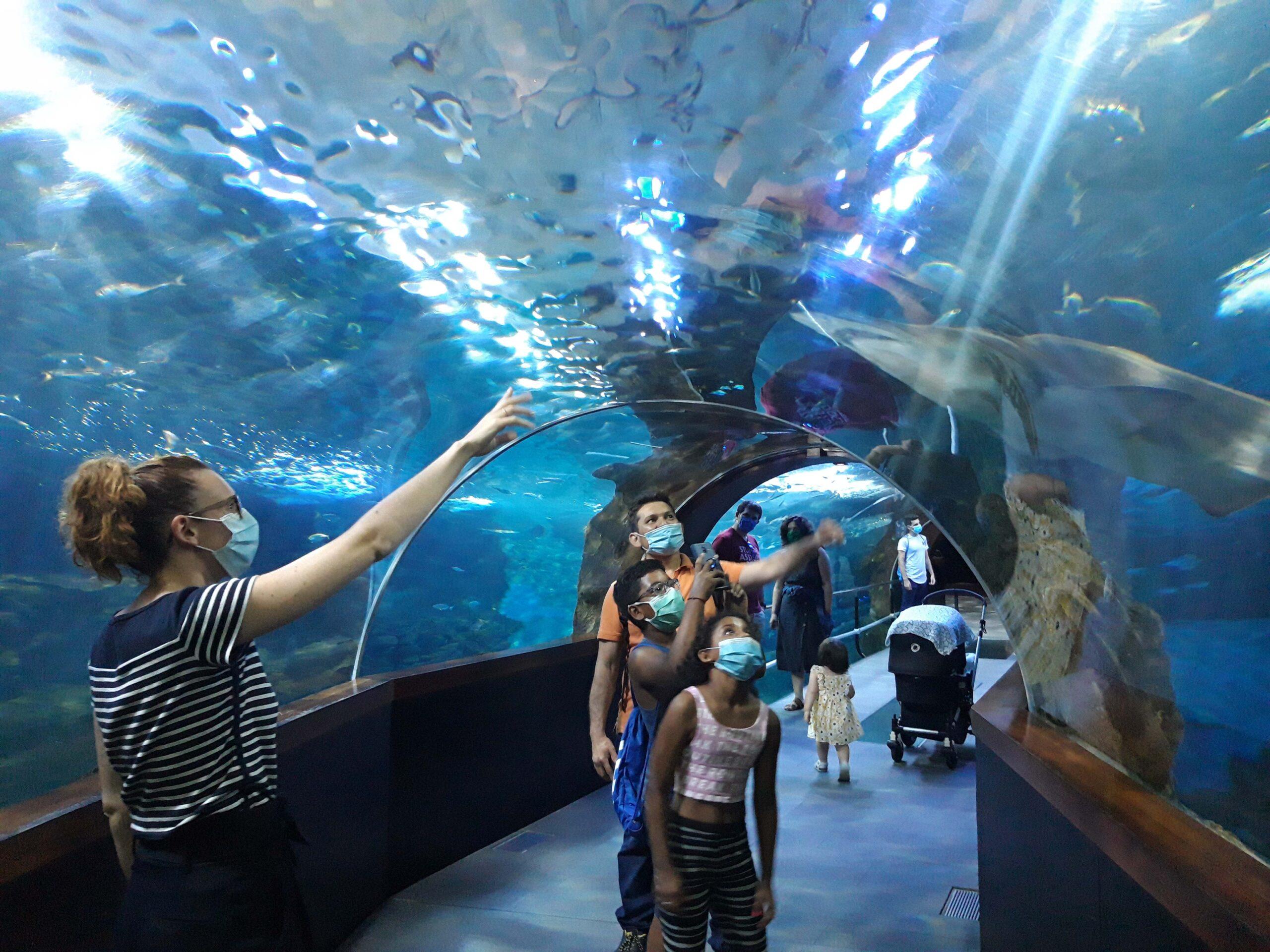 Visitantes en el túnel del Aquarium. Foto: Aquarium de Donostia