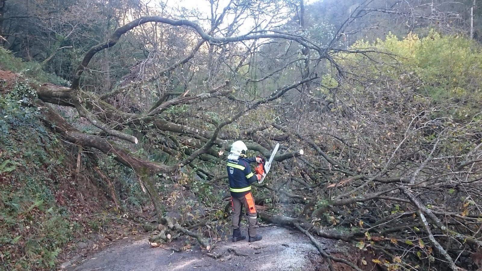Retirada de árboles en Tolosa. Foto: Diputación