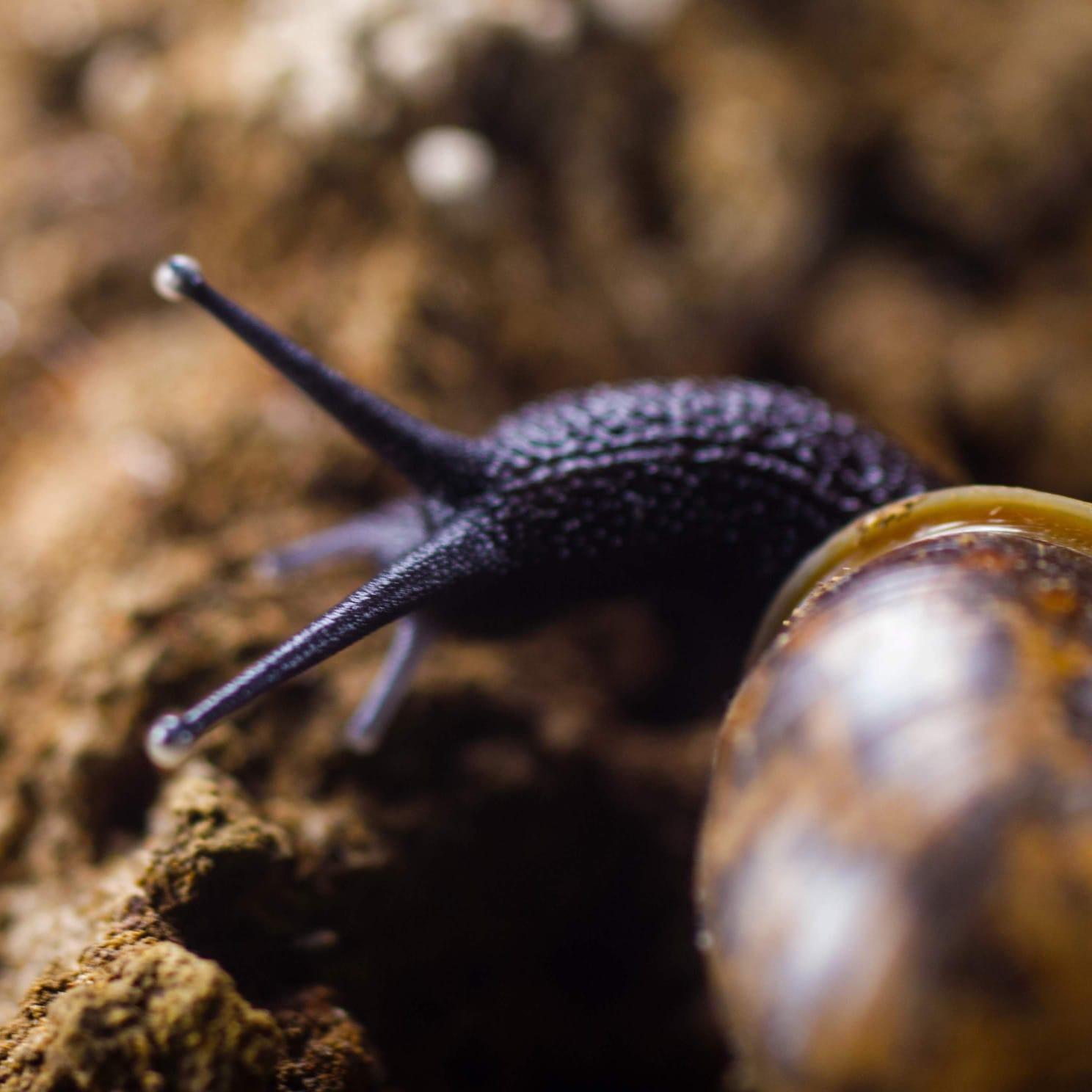 IMG 20201123 WA0002 - Akerbeltz pide ayuda para indagar en la rica biología subterránea de Gipuzkoa