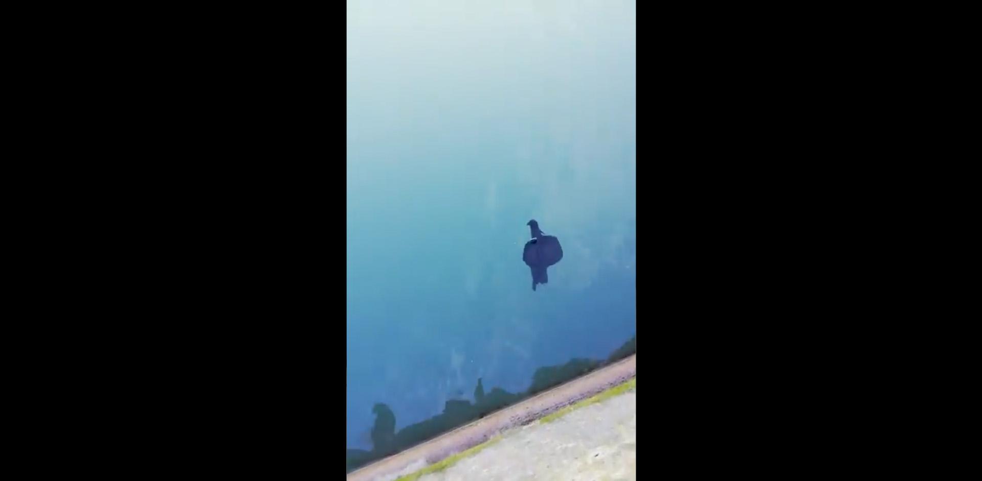 Imagen de la liebre de mar (vídeo dentro).