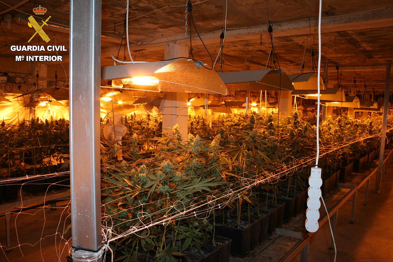 201230 Plantacion marihuana GC GI - La Guardia Civil desmantela en Zumaia una nave dedicada al cultivo de marihuana