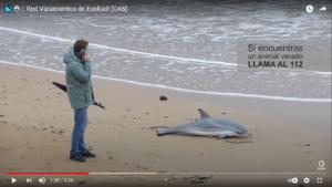 Varamientosdef Más de 30 animales quedan varados al año en la costa vasca