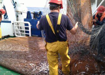 Imagen de archivo. Pesca de anchoas. Foto: Gobierno vasco